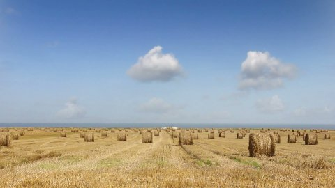 Wheat field 01 - stock footage