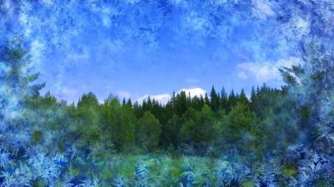 summer nature scene get covered by frost pattern - stock footage