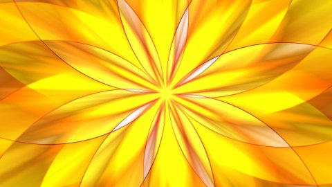 Floral pattern  - stock footage