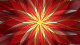 Abstract flower design  - motion graphic