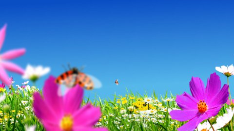 reen meadows and flowers - stock footage