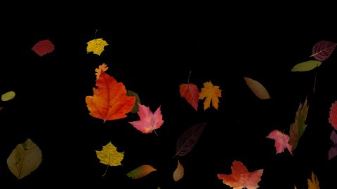 Falling leaves 03 - stock footage