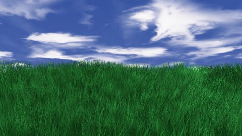 Grass Field 01 - stock footage