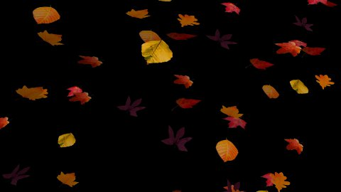 Falling Leaves 01 - stock footage