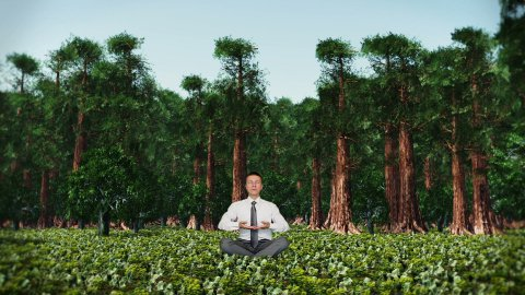 Businessman in Forest Meditating - stock footage