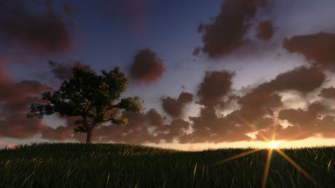 Solitary tree on green meadow, timelapse sunrise, night to day - stock footage