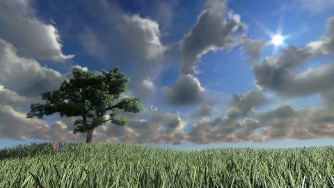 Solitary tree on green meadow, timelapse clouds - stock footage