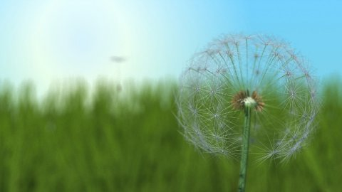 Spring Time Dandelion - stock footage