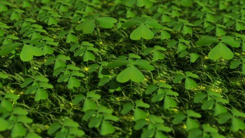 Shamrocks and Four Leaf Clover - stock footage