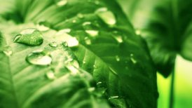 leaf with drops close-up sequence - motion graphic
