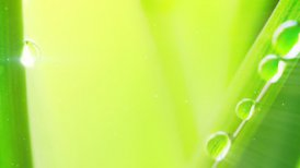 water drop on grass extremely close-up loop - motion graphic