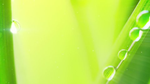 water drop on grass extremely close-up loop - stock footage