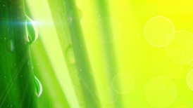 water drops on grass extremely close-up loop - motion graphic