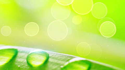water drops on grass during wind loop - stock footage