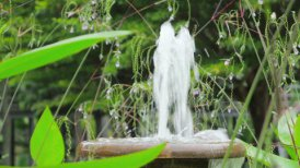 fountain in tropical garden - motion graphic