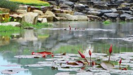 pond in park during rain - motion graphic
