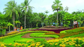 flowers in Nong Nooch tropical garden in Thailand - motion graphic