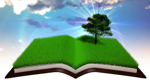 Book Opens - stock footage