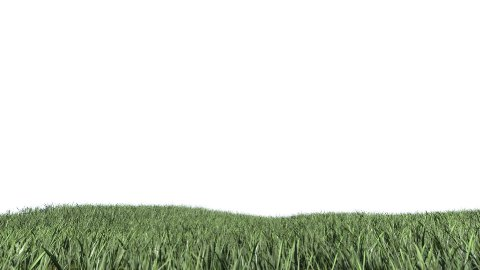 Grass Field against white - stock footage