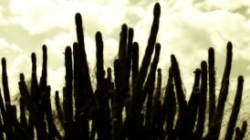 Cactus Timelapse 06 - editable clip, motion graphic, stock footage