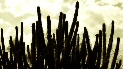 Cactus Timelapse 06 - stock footage