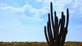 Cactus Timelapse 03 - editable clip, motion graphic, stock footage
