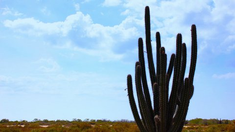 Cactus Timelapse 03 - stock footage