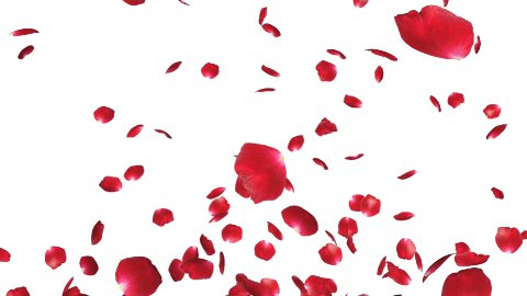 Rose petals Flying - stock footage