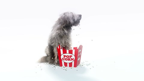 Downy dog eats popcorn and barks, loop - stock footage