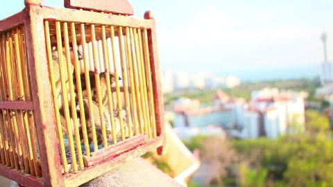 birds fly out of cage - stock footage