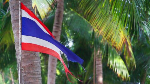waving ripped flag of thailand against palm trees - stock footage