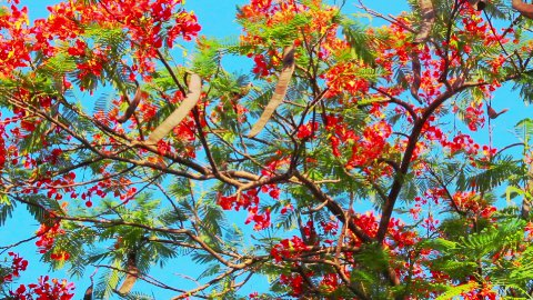 branches with flowers of blossom tree against sky - stock footage