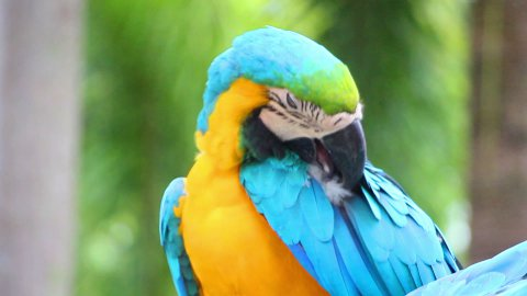 colorful parrot macaw sequence  - stock footage