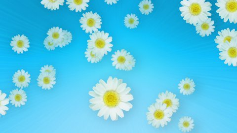 Spring Summer Daisies Blue - stock footage