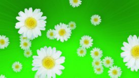 Spring Summer Daisies Green