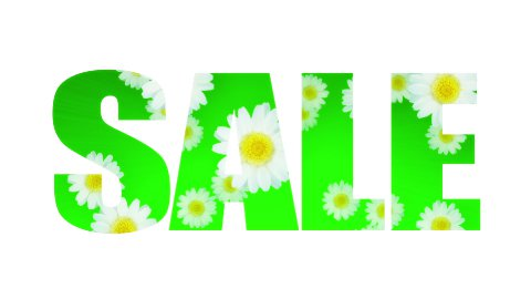 Sale Spring Summer Daisy (Loop) - stock footage