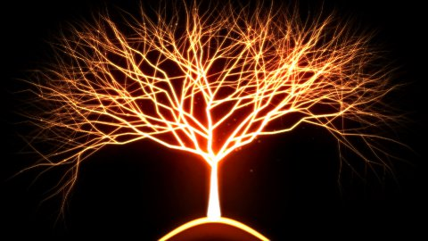 Tree of Light Particles - Red - stock footage