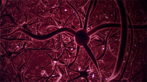 Neurons, brainstorm, seamless loop, red and fast version. - stock footage