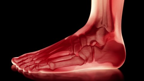 Bones of the Foot, Loop, 4k - Ultra HD. - stock footage