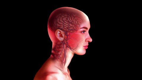 Internal head anatomy. Profile of woman - stock footage