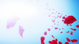 Rose Petals Sky Background (Loop) - motion graphic