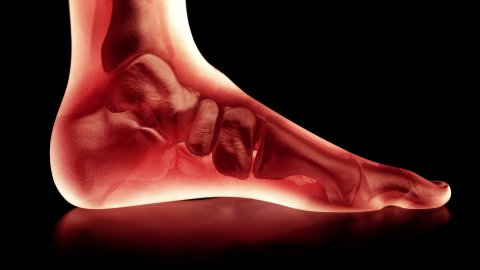 Bones of the Foot. Camera rotates 360 degrees. Seamless Loop. - stock footage