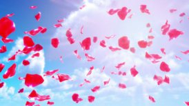 Rose Petals Falling from Sky (Loop)