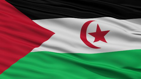 Close Up Waving National Flag of Western Sahara - stock footage