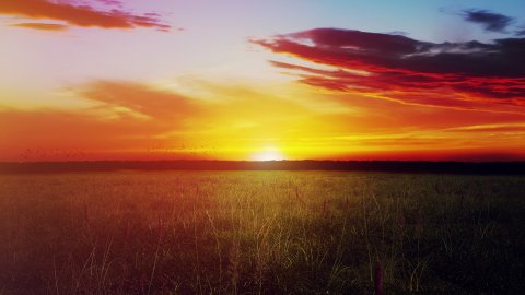 Sunset Over Field With Green Grass And Sky With Clouds - stock footage