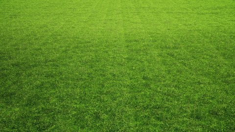 Perfect Lawn, LOOP - stock footage