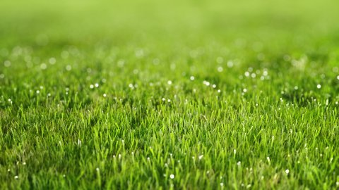 Perfect green lawn. Sward with dew. - stock footage