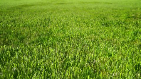 Green Grass - stock footage
