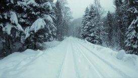 Snow-covered mountain road in a forest. Slow motion.