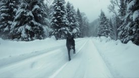 The Black Dog and Snow-covered Mountain Road in Winter. Slow Motion.